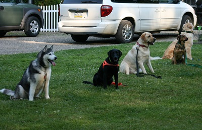 Outdoor training course at Paws 'n Claws in Erie, PA.